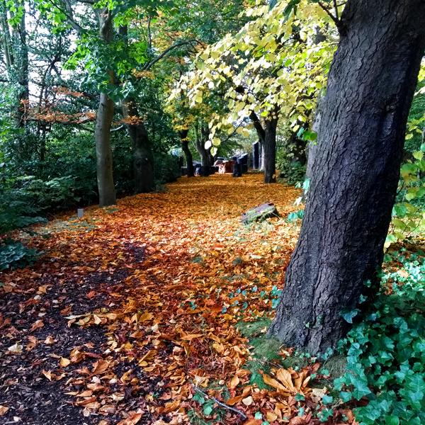 Golden leaves cover a path through the woodland floor