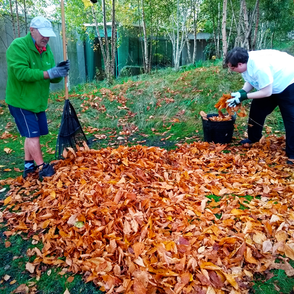 Two people collecting leaves for leaf mould