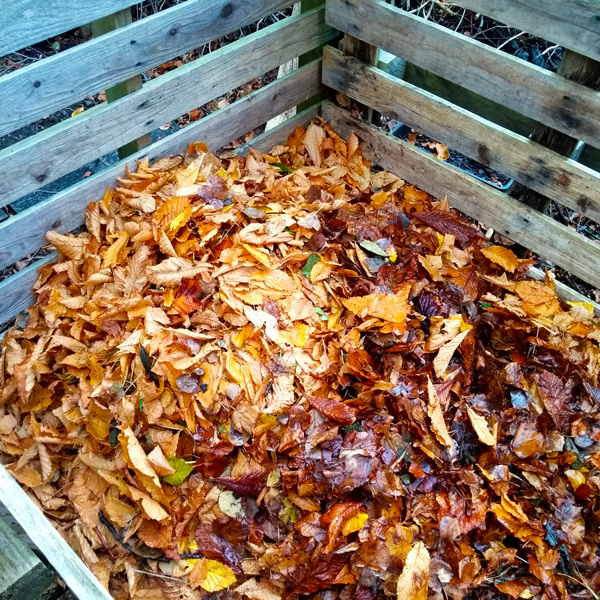 wooden pallet frame filled with freshly fallen leaves